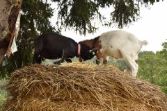 Kozy v kempu